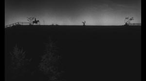 silhouette shot